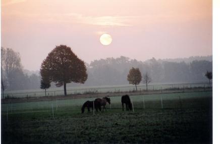 Morgendliche Herbstidylle; Foto: Günter Dickmann